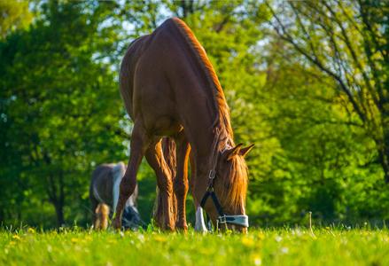 Equestrian Grass Seed