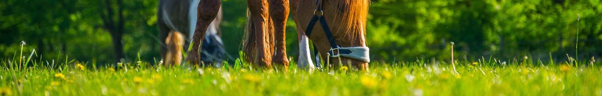 Equestrian Grass Seed