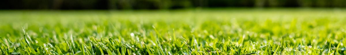 Grass Seed Online