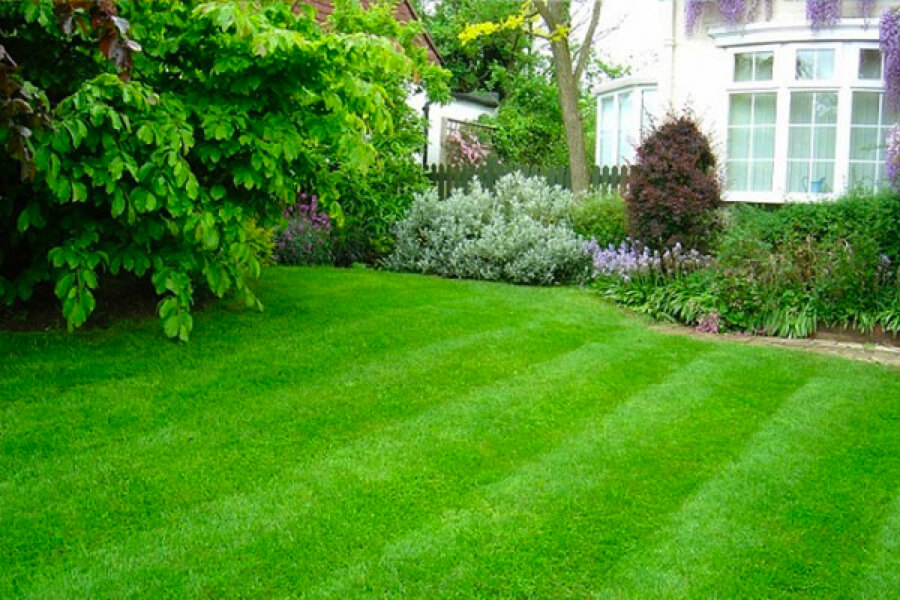 Home Grass Seed