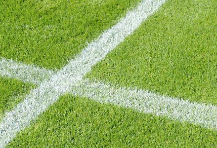 Sports Grass Seed