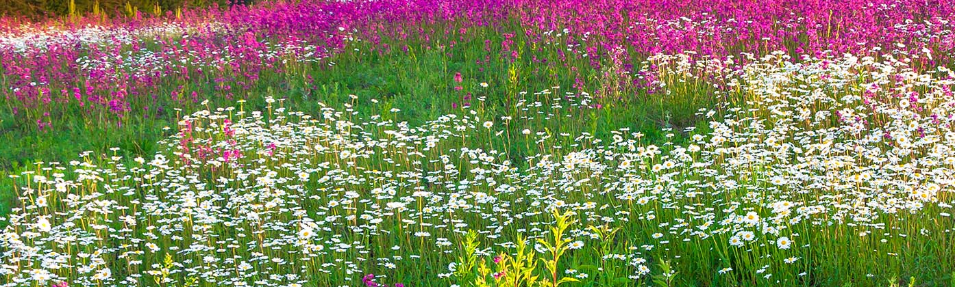 Wildflower Seed UK