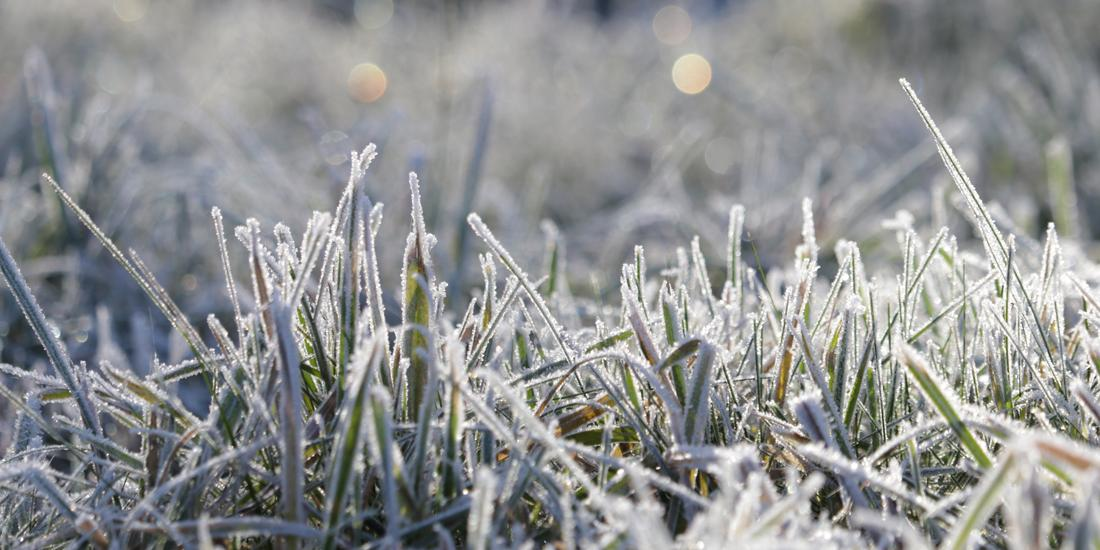 Winter is coming: 5 quick tips to get your garden ready for winter