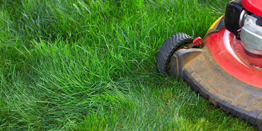 When to mow and fertilise a new lawn