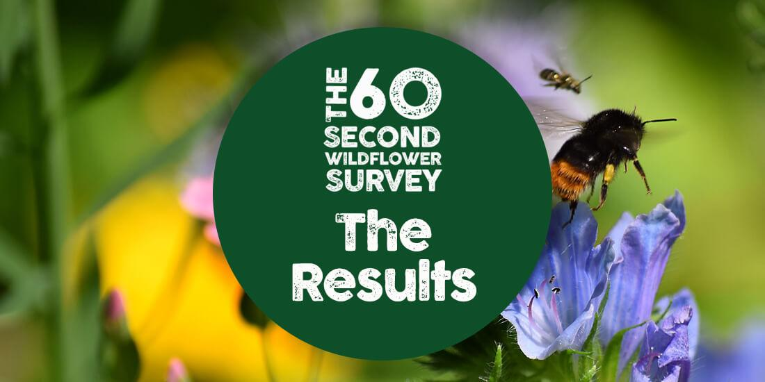 The UK goes wild for our wildflower survey!