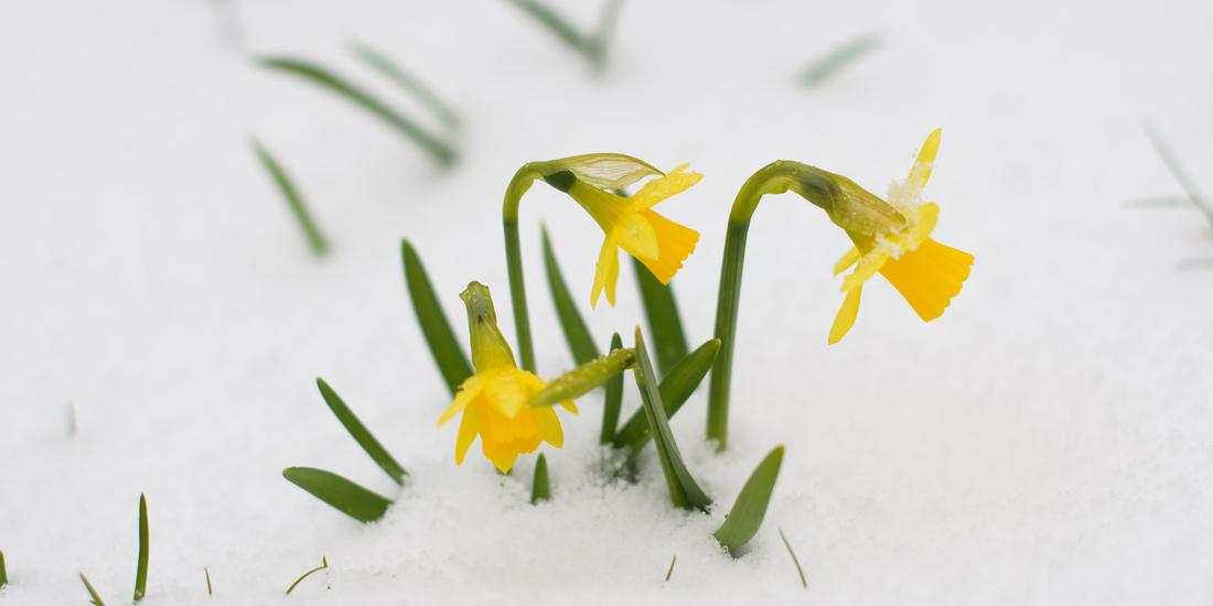 How snow in April affects your lawn