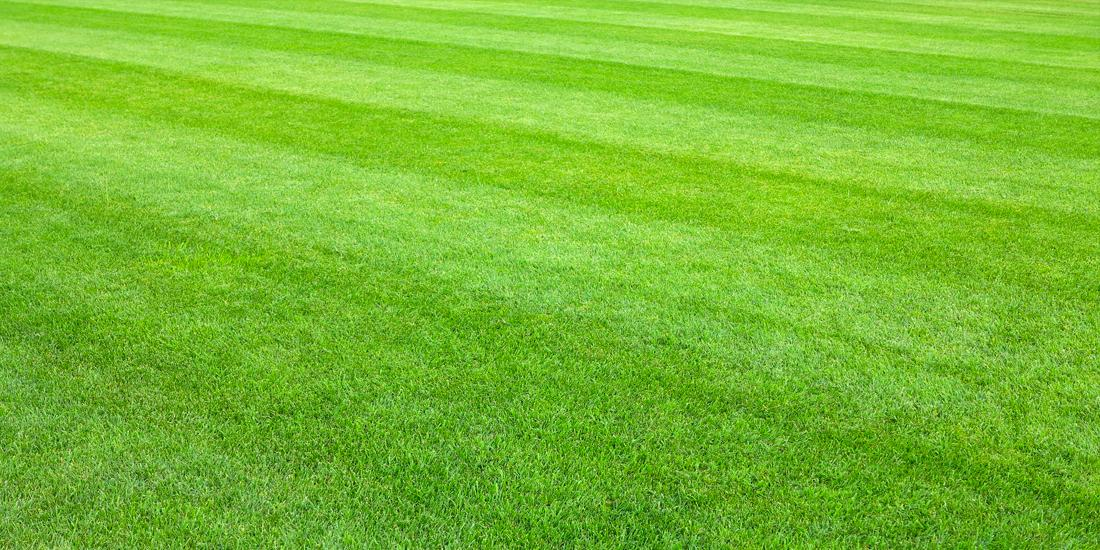 How to care for an ornamental lawn