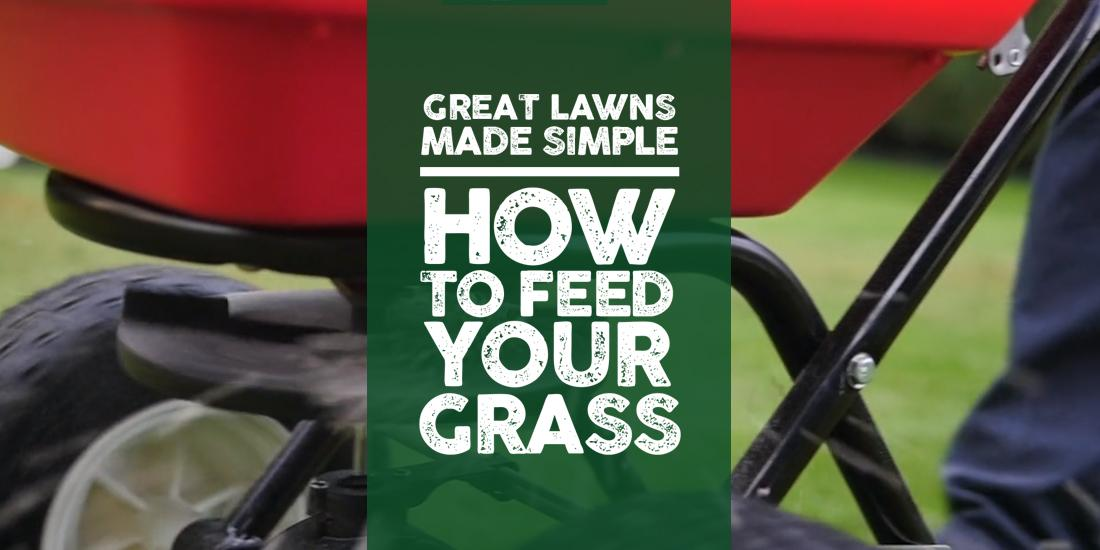 Great Lawns Made Simple: How to feed your grass