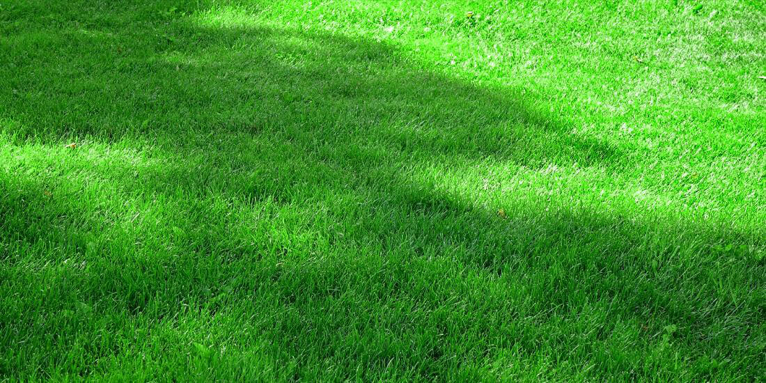 The best shade mix for lawns