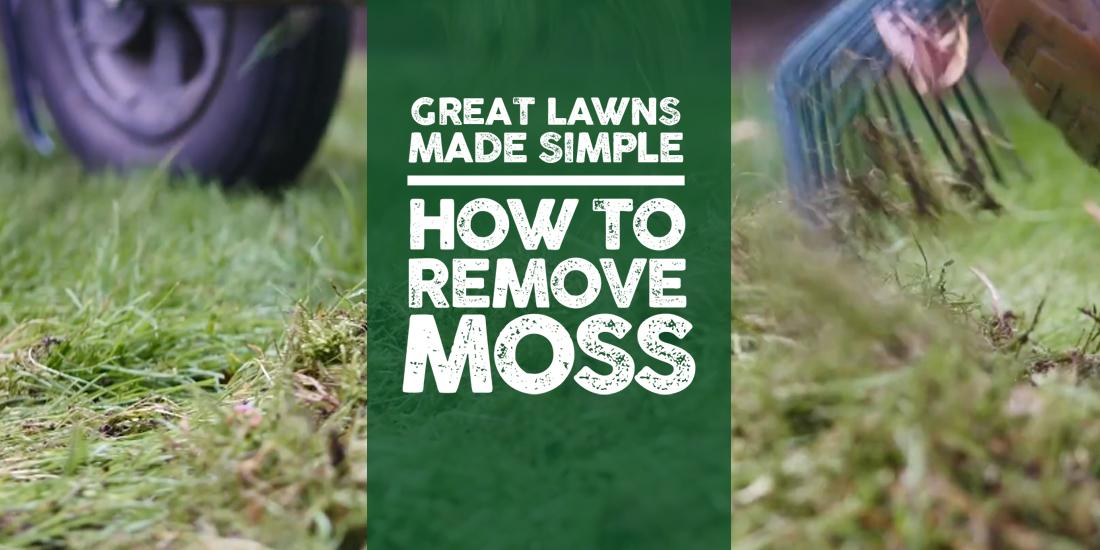 Great Lawns Made Simple: How to remove moss
