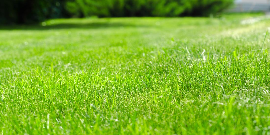 Lawn Care Seasonal Checklist
