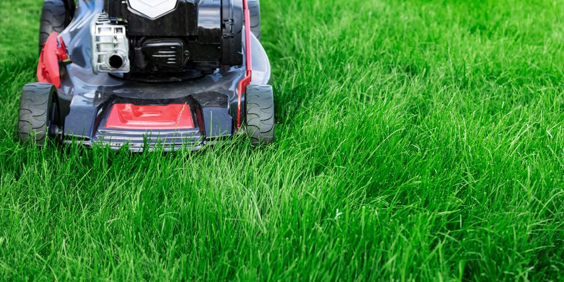 How to mow grass in summer