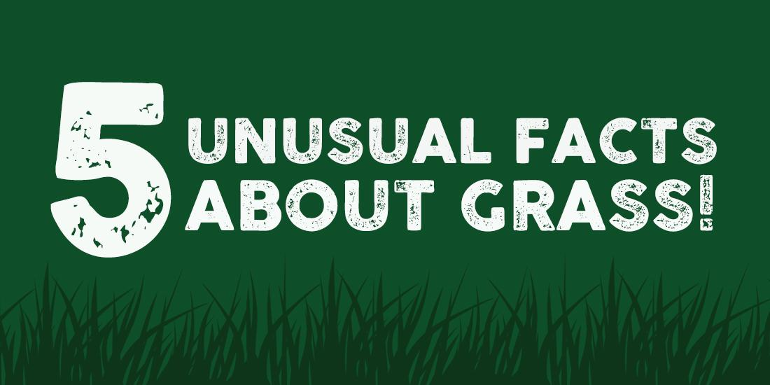 5 unusual facts about grass