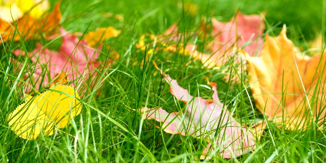 What fertiliser should I use in autumn?