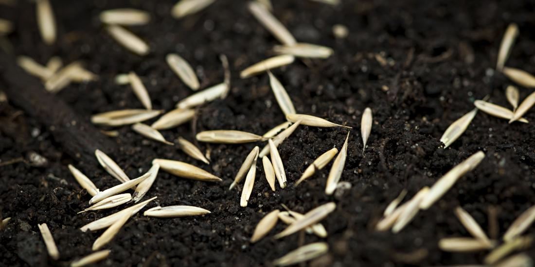 Can I sow grass seed in November?
