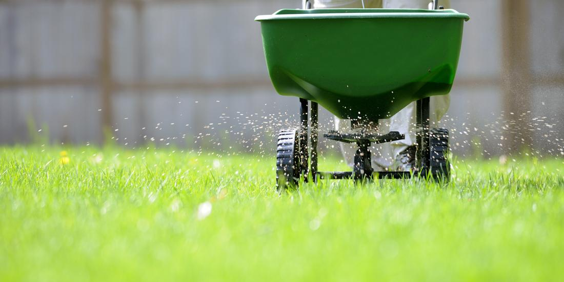 How to fertilise your lawn in summer