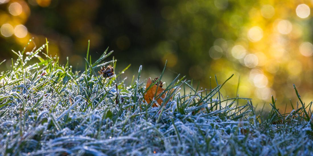 What fertiliser should I use in winter?