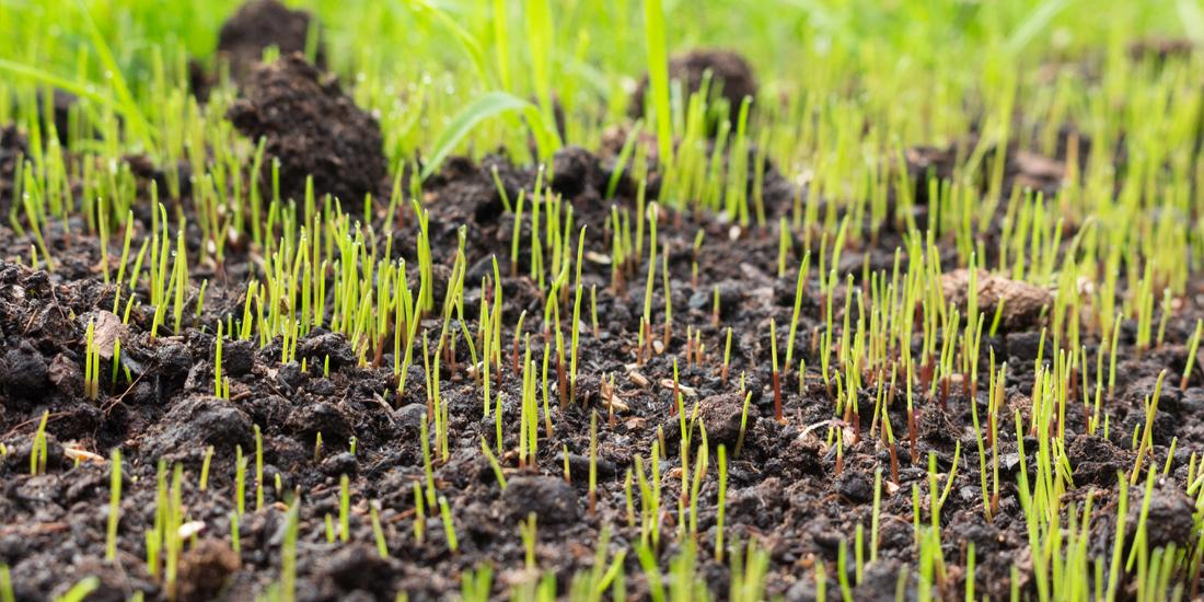 When will my grass seed grow?
