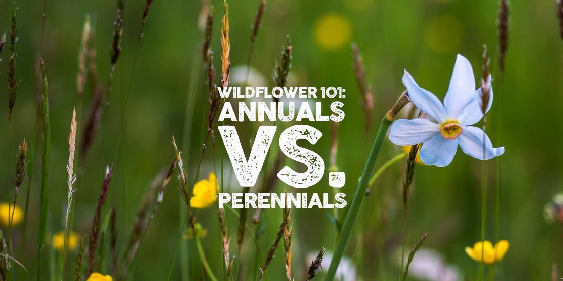 Wildflower 101: Annuals vs. Perennials
