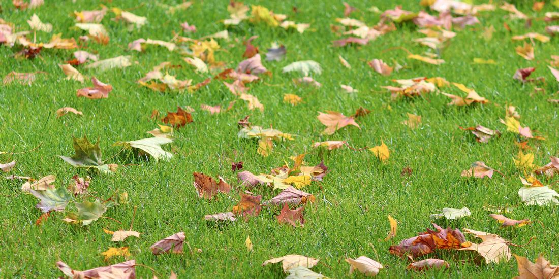 7 Reasons to sow grass seed in autumn
