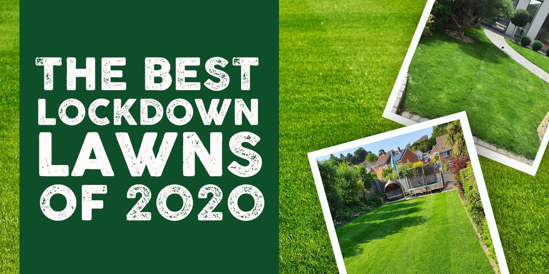The Best Lockdown Lawns of 2020!