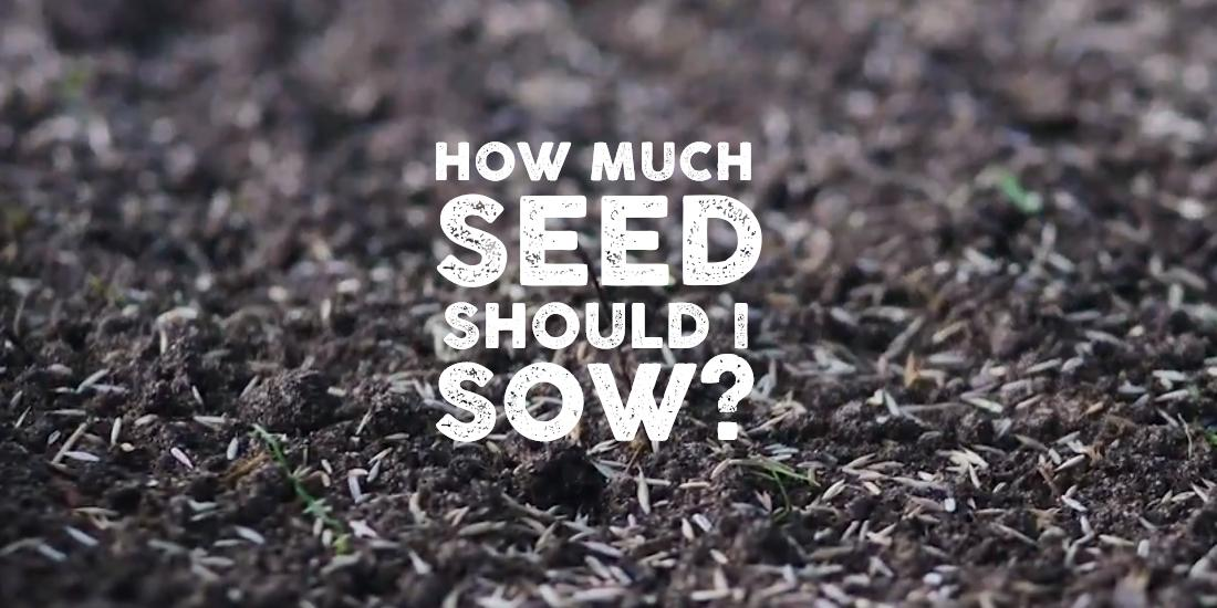 Knowing what to sow: How much grass seed should I sow?