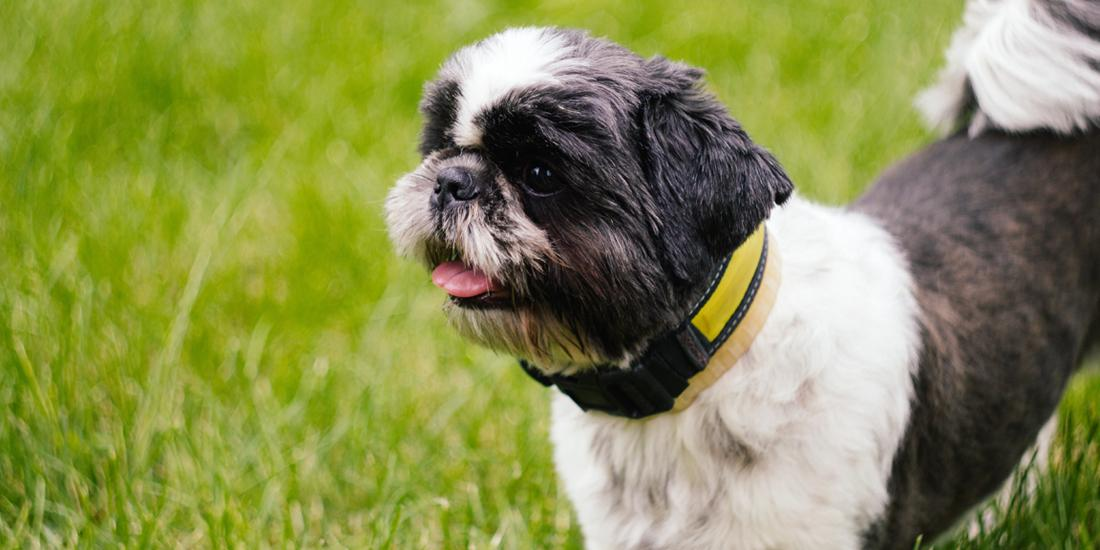 How to repair dog urine patches