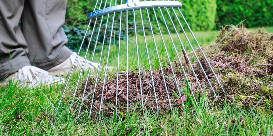 How to scarify your lawn