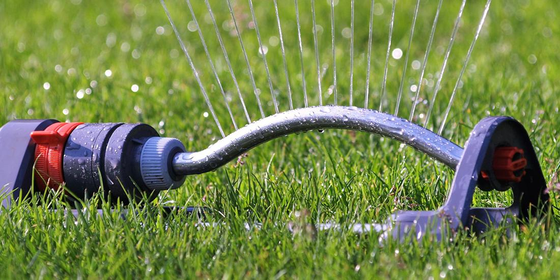 How to care for your lawn in a heatwave
