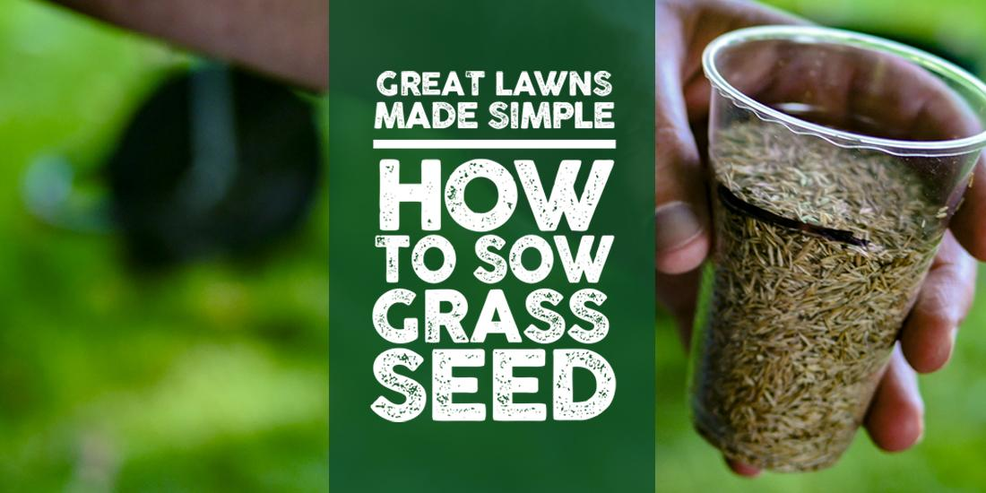 Great Lawns Made Simple: How to sow grass seed