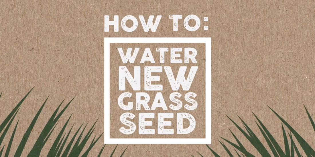 How to: Water new grass