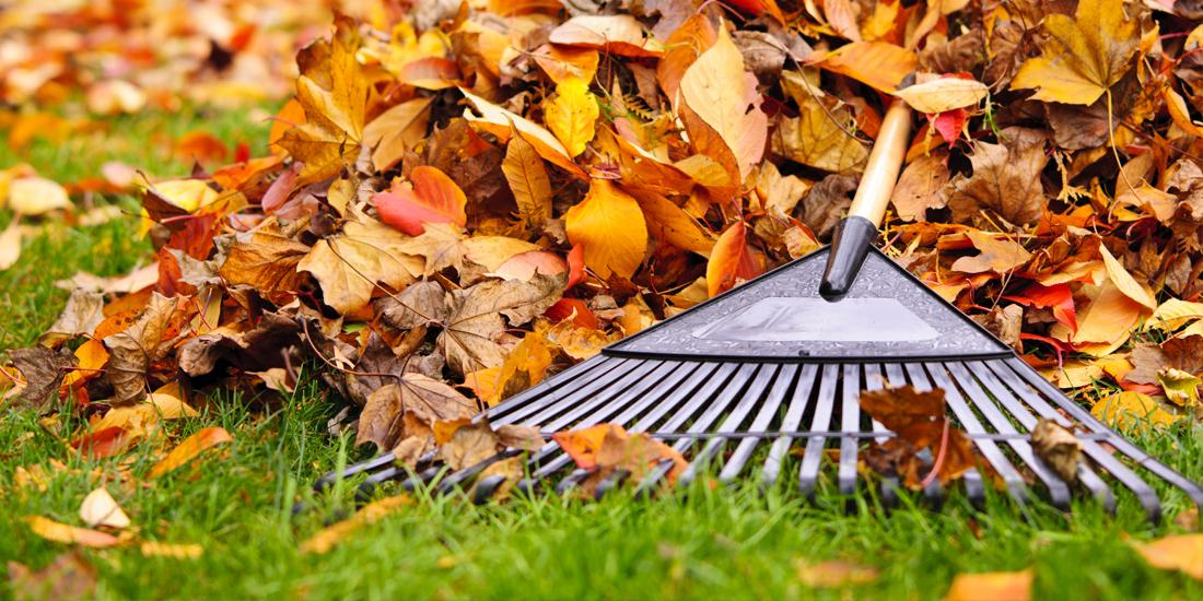 Should I fertilise my lawn in autumn / winter?