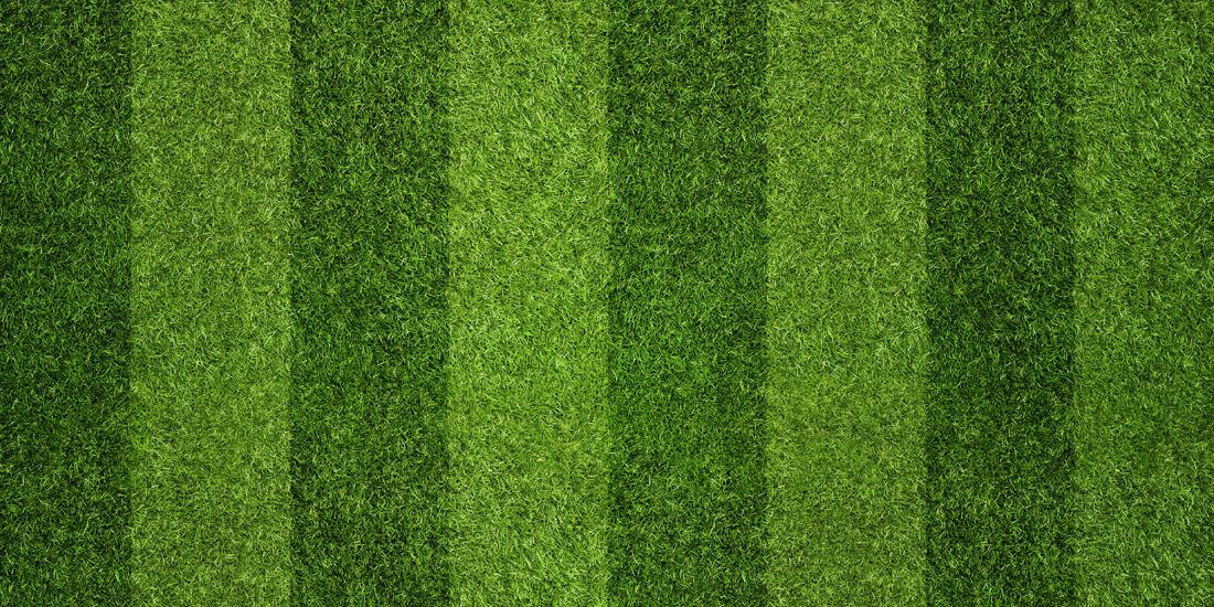How to get a Wimbledon-worthy lawn