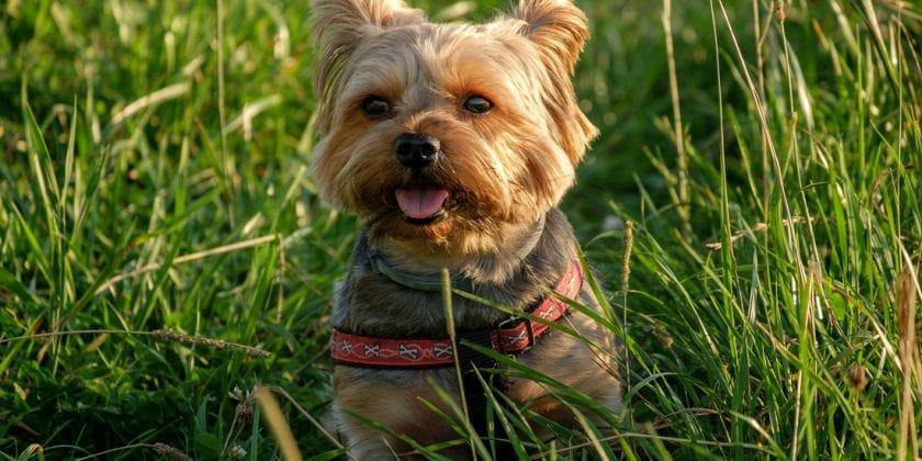 Friendly fertiliser: Is fertiliser safe for pets?