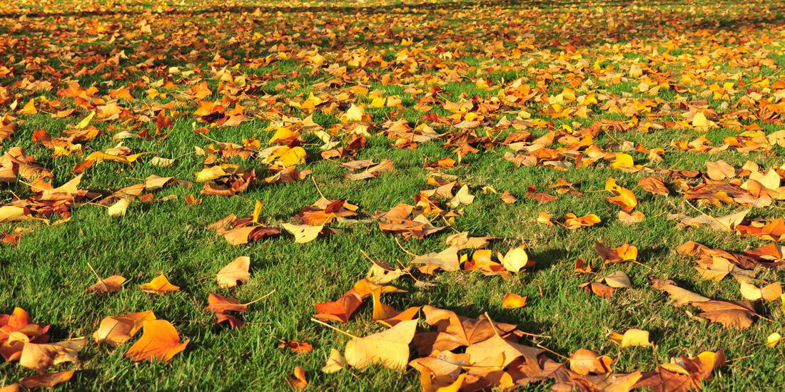 7 quick tips for a better lawn this autumn / winter