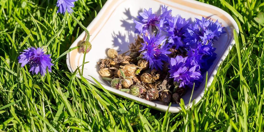 End of season wildflower meadow management