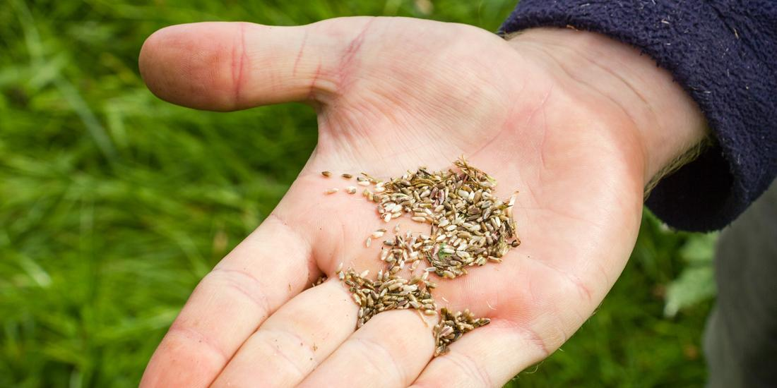 How to sow wildflower seed