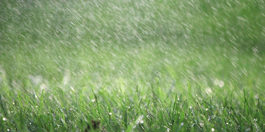 Total Washout: Will my seed germinate in heavy rain?