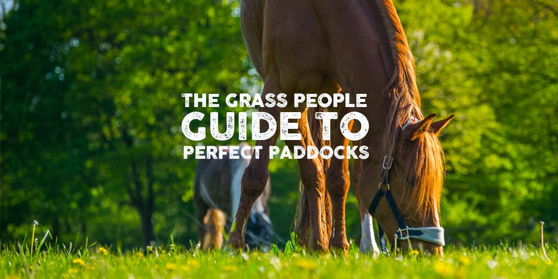 How to manage your horse paddock