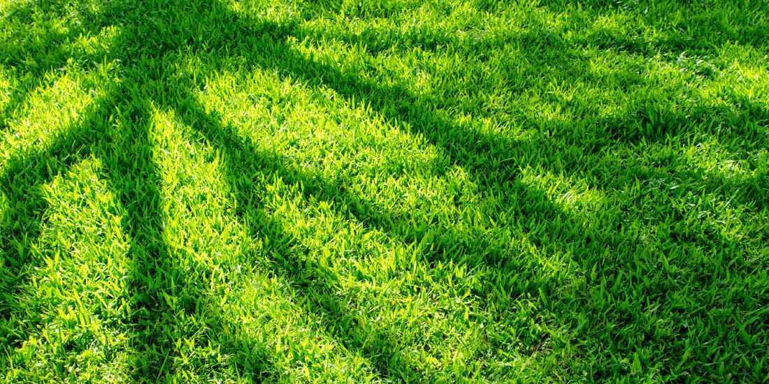 Choosing the best grass seed for lawns in shade