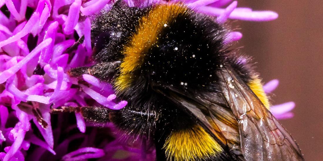 Bee-autiful: 10 wildflowers that bees love