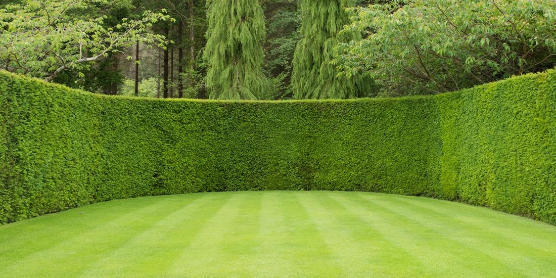 How to care for a fine leafed lawn