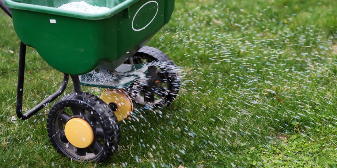 Best Lawn Fertiliser Guide