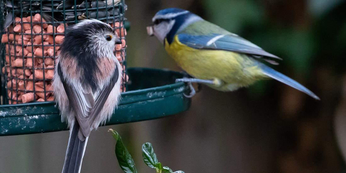 How to protect grass seed from birds