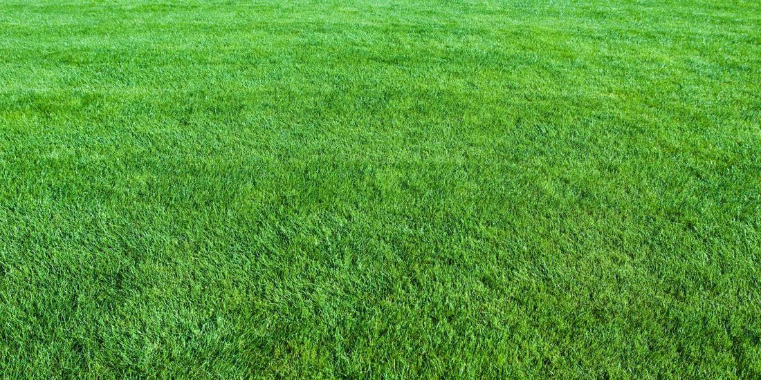 New Year, New Lawn Checklist
