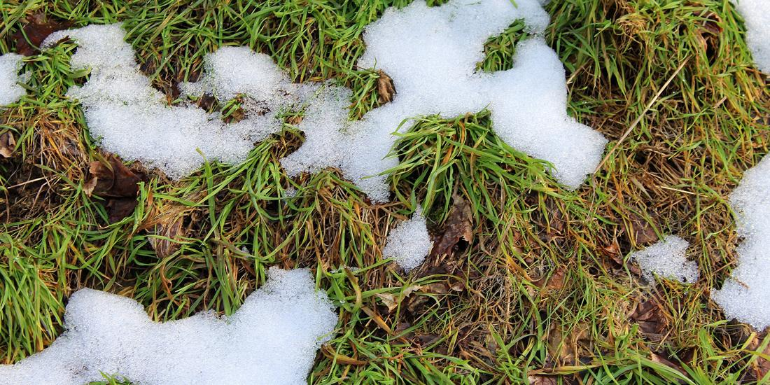 Two typical winter lawn diseases and how to fight them
