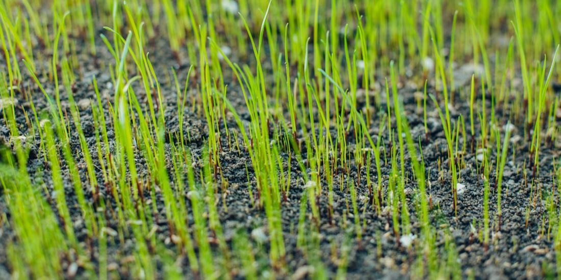 Can I sow grass seed now?