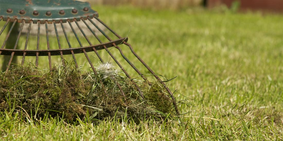 How to get rid of moss on your lawn