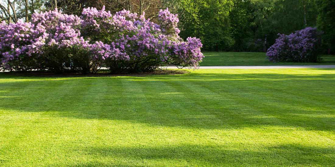 STEADFAST: Tackling your Shaded Lawn issues this spring