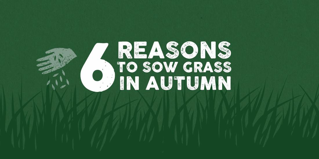 Six reasons to sow grass seed in autumn